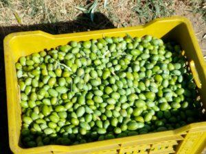 Olive da ammirare